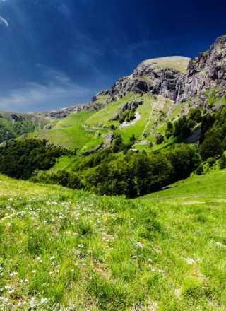 Лято в планината